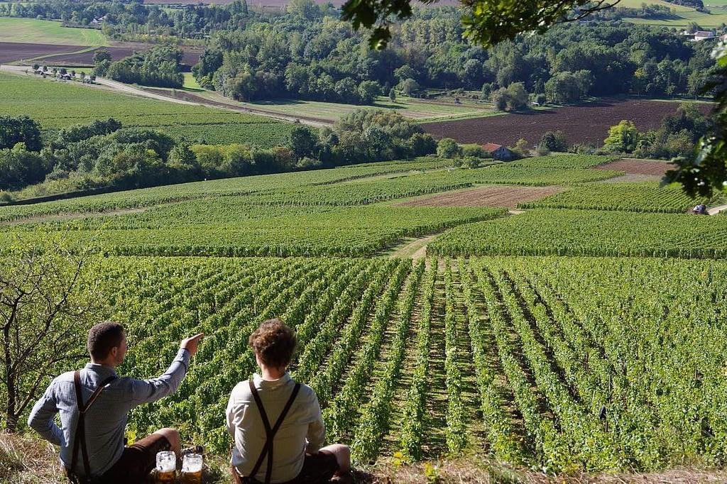 Brasserie de Chablis - Dans les vignes